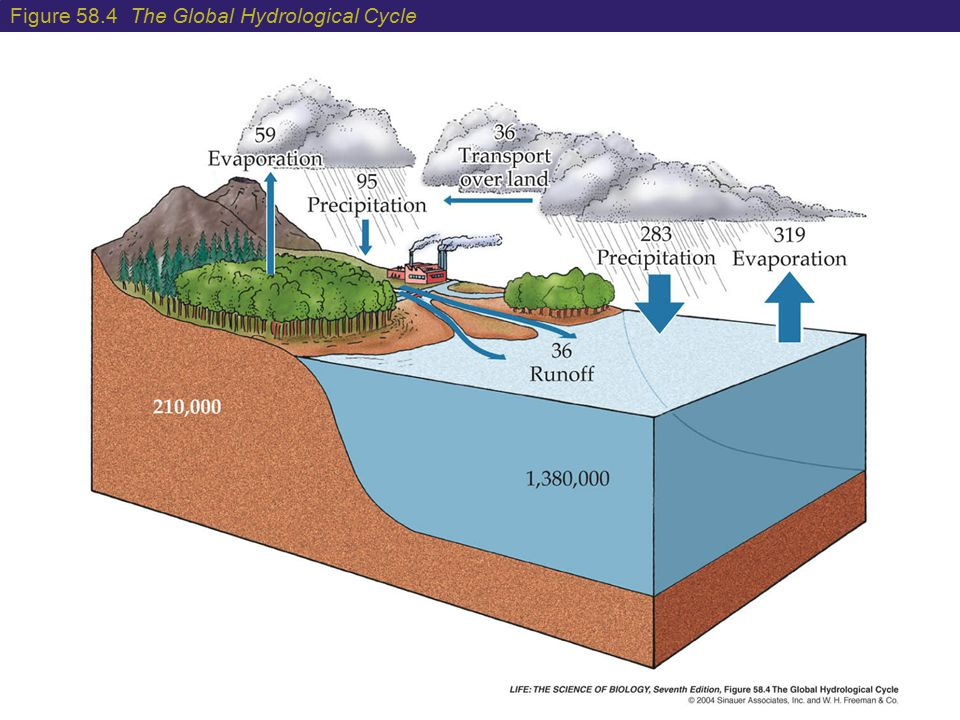 Figure 58.4 The Global Hydrological Cycle
