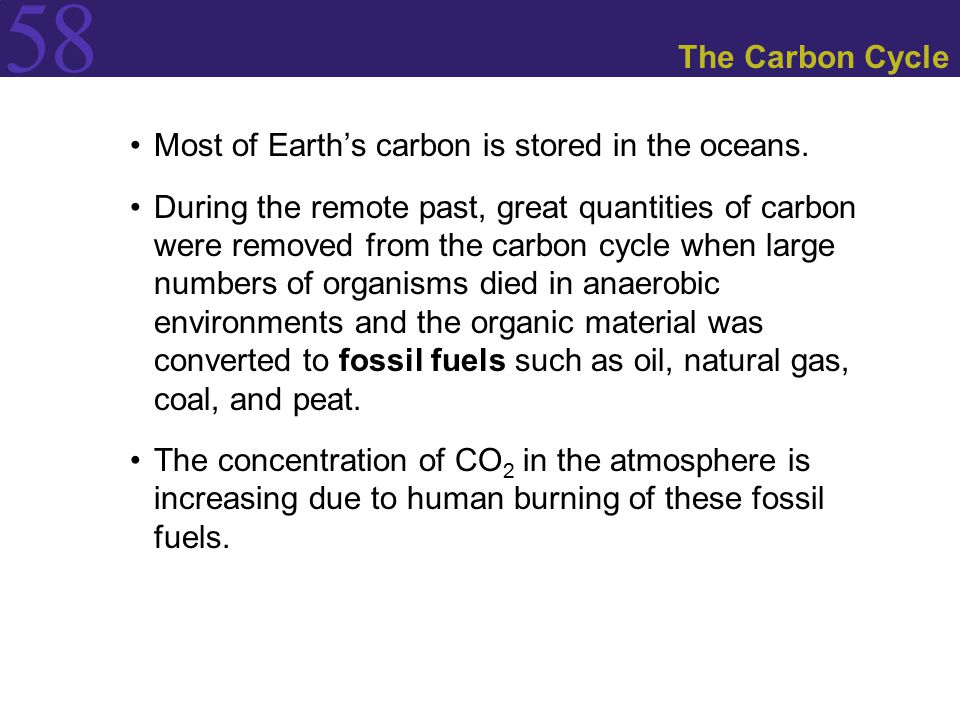 The Carbon Cycle Most of Earth's carbon is stored in the oceans.