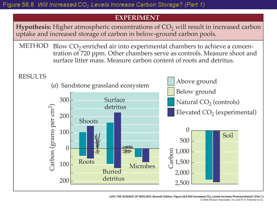 Figure 58. 8 Will Increased CO2 Levels Increase Carbon Storage
