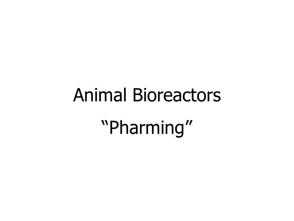 Animal Bioreactors Pharming