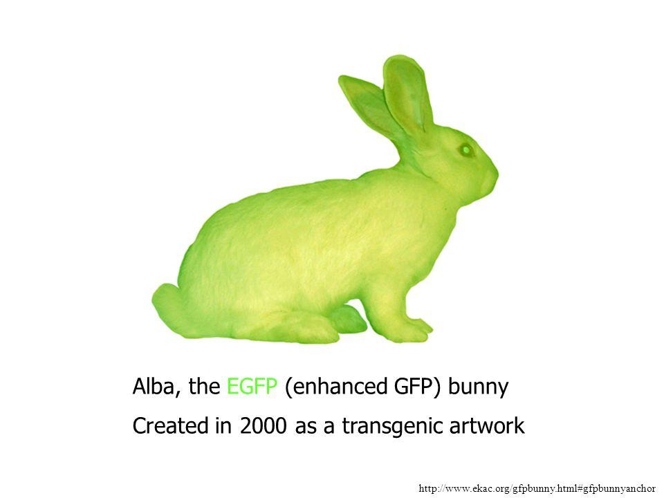 Alba, the EGFP (enhanced GFP) bunny