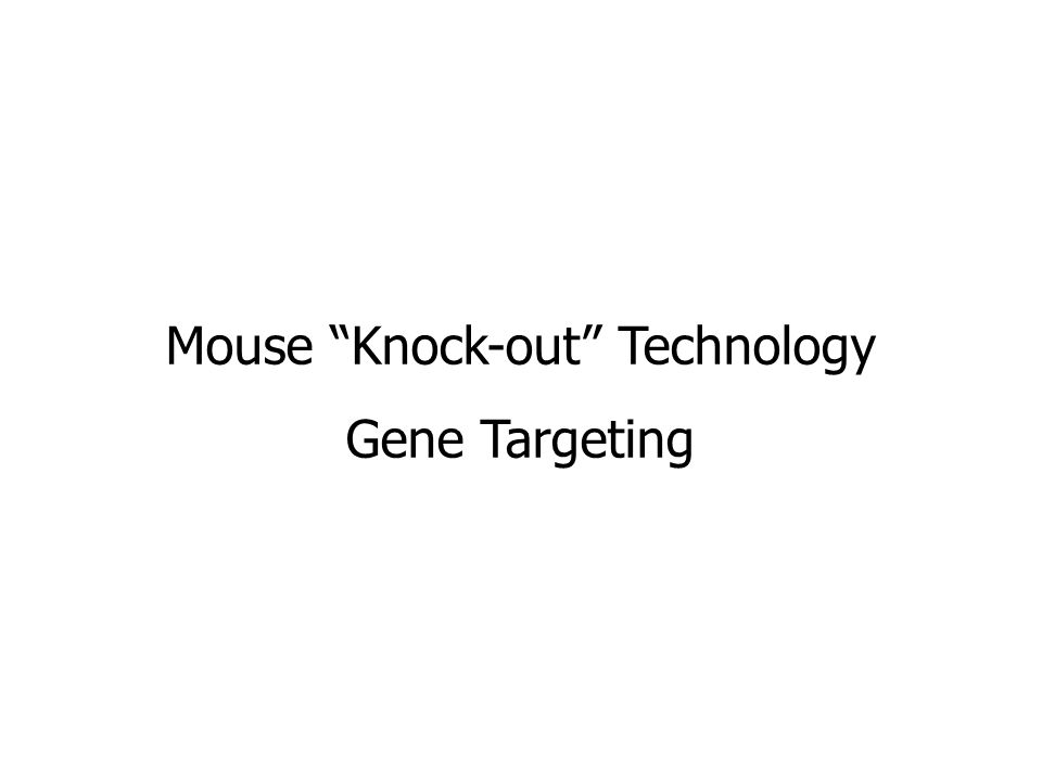 Mouse Knock-out Technology