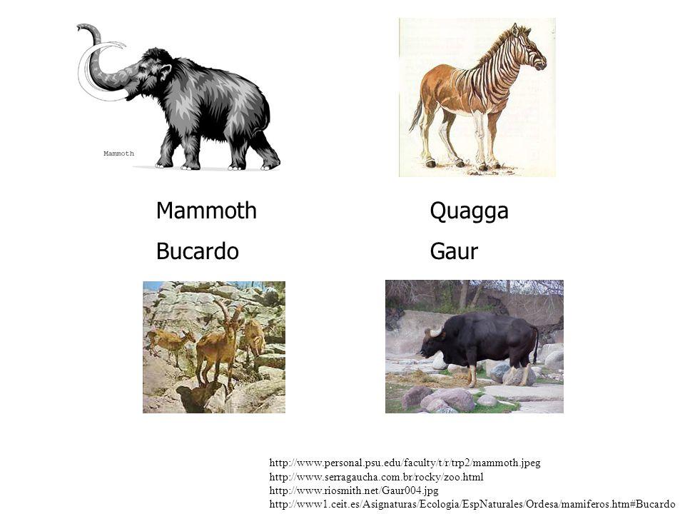 Mammoth Quagga Bucardo Gaur