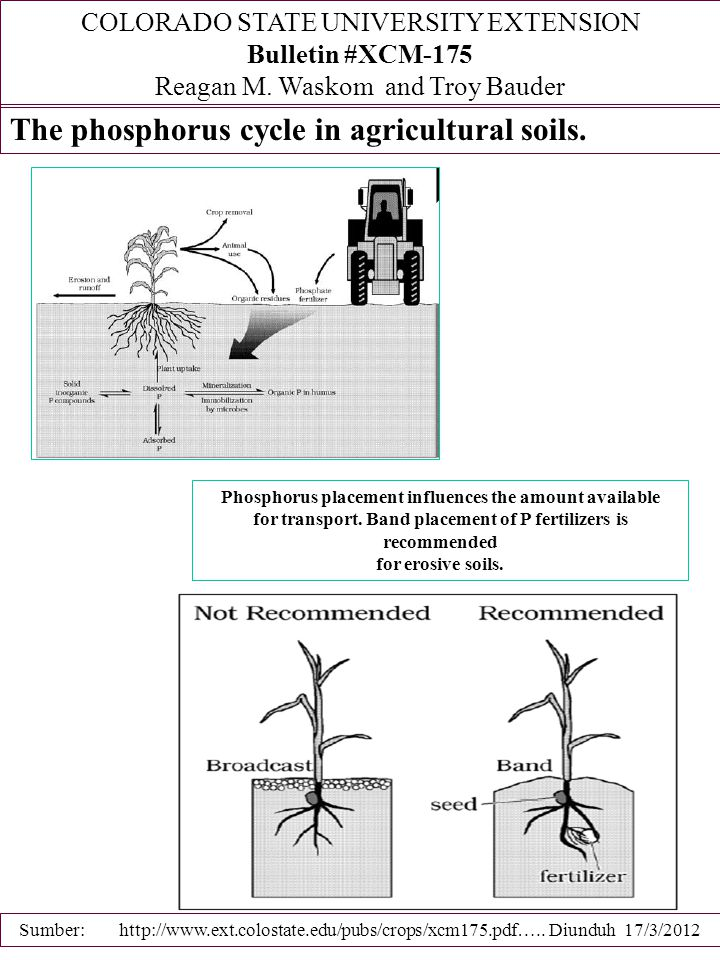 The phosphorus cycle in agricultural soils.