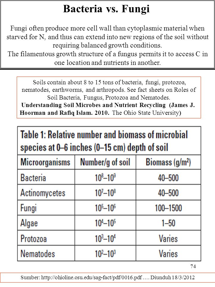 Bacteria vs. Fungi
