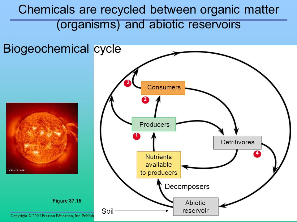 Chemicals are recycled between organic matter (organisms) and abiotic reservoirs