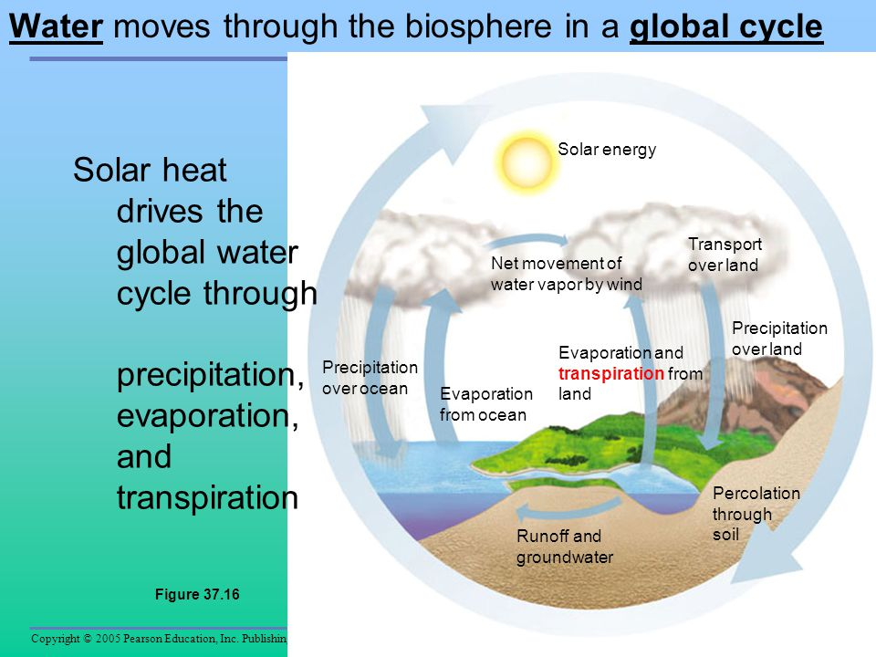 Water moves through the biosphere in a global cycle