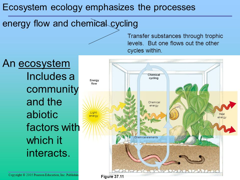 Includes a community and the abiotic factors with which it interacts.