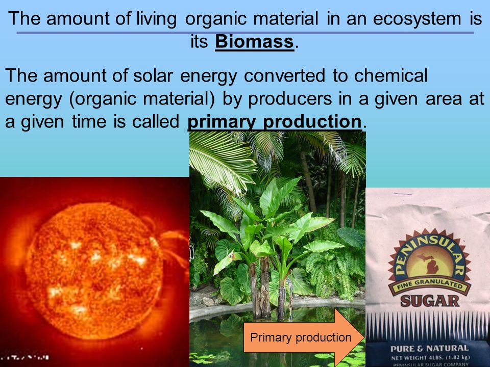 The amount of living organic material in an ecosystem is its Biomass.