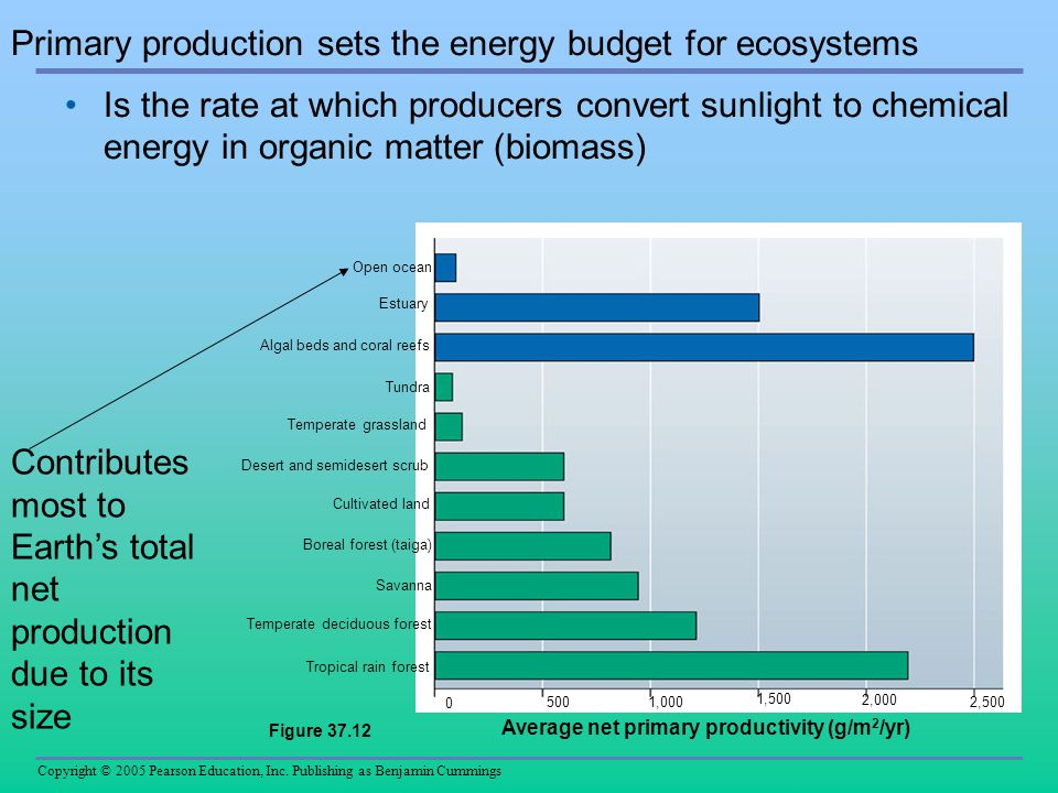 Primary production sets the energy budget for ecosystems