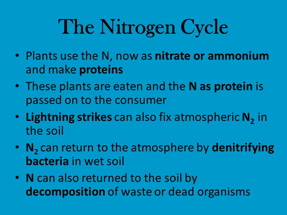 The Nitrogen Cycle Plants use the N, now as nitrate or ammonium and make proteins.