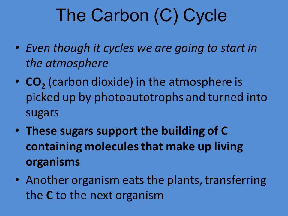 The Carbon (C) Cycle Even though it cycles we are going to start in the atmosphere.