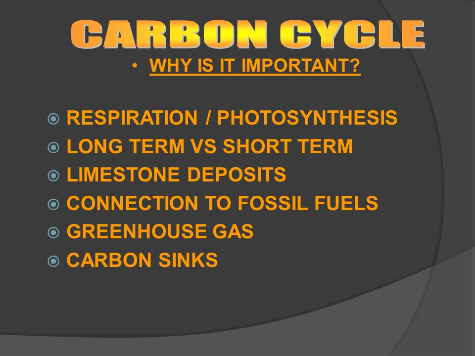 CARBON CYCLE RESPIRATION / PHOTOSYNTHESIS LONG TERM VS SHORT TERM