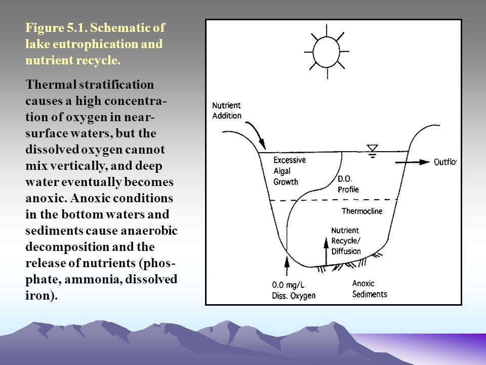 What Is Eutrophication  Definition Causes amp Effects