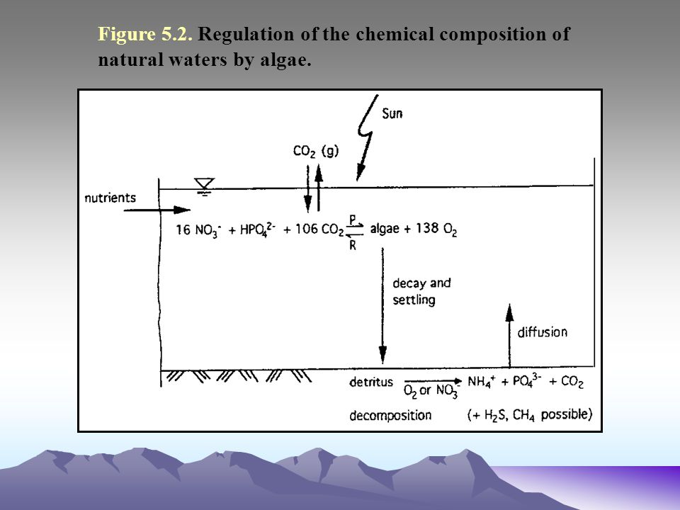 Figure 5.2. Regulation of the chemical composition of natural waters by algae.