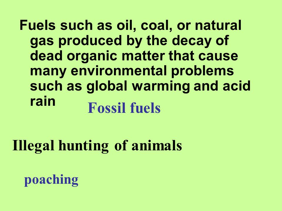Illegal hunting of animals
