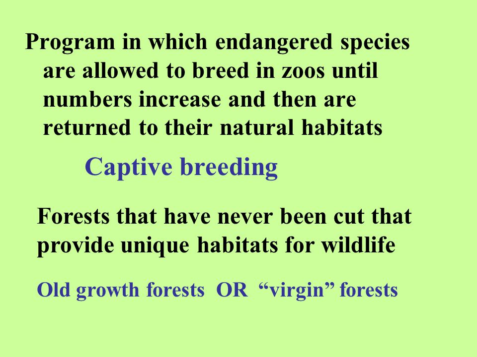 Program in which endangered species are allowed to breed in zoos until numbers increase and then are returned to their natural habitats