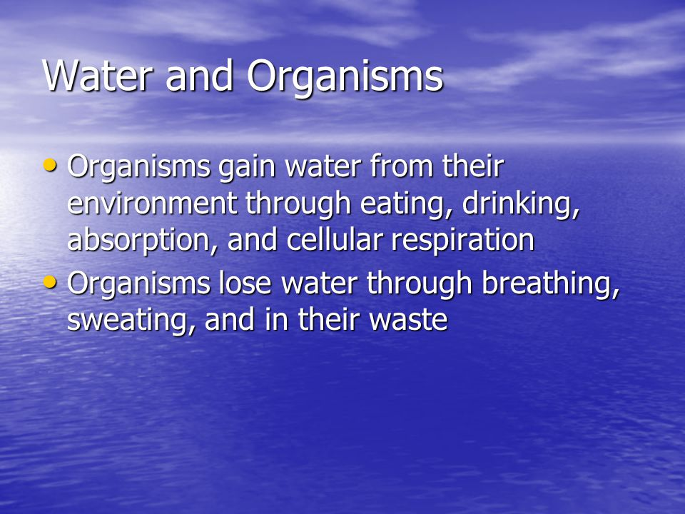 Water and Organisms Organisms gain water from their environment through eating, drinking, absorption, and cellular respiration.
