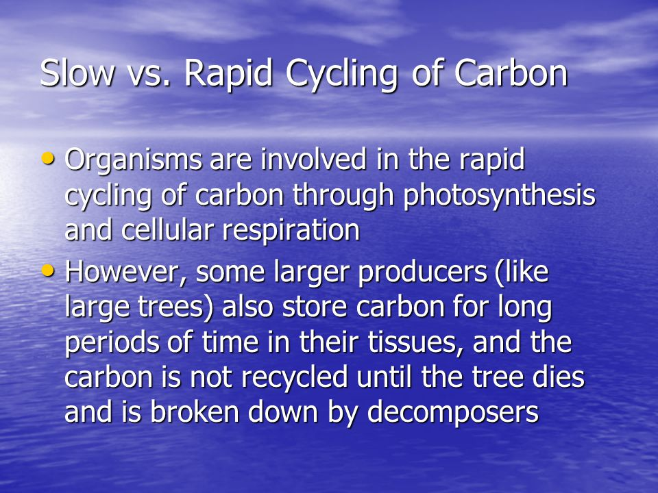 Slow vs. Rapid Cycling of Carbon