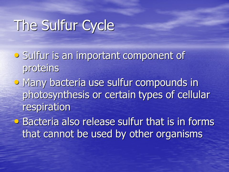 The Sulfur Cycle Sulfur is an important component of proteins