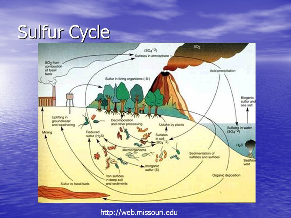 Sulfur Cycle http://web.missouri.edu