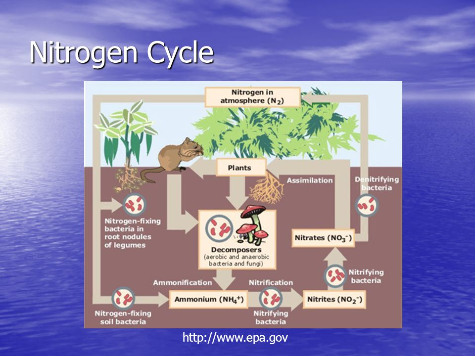 Nitrogen Cycle http://www.epa.gov
