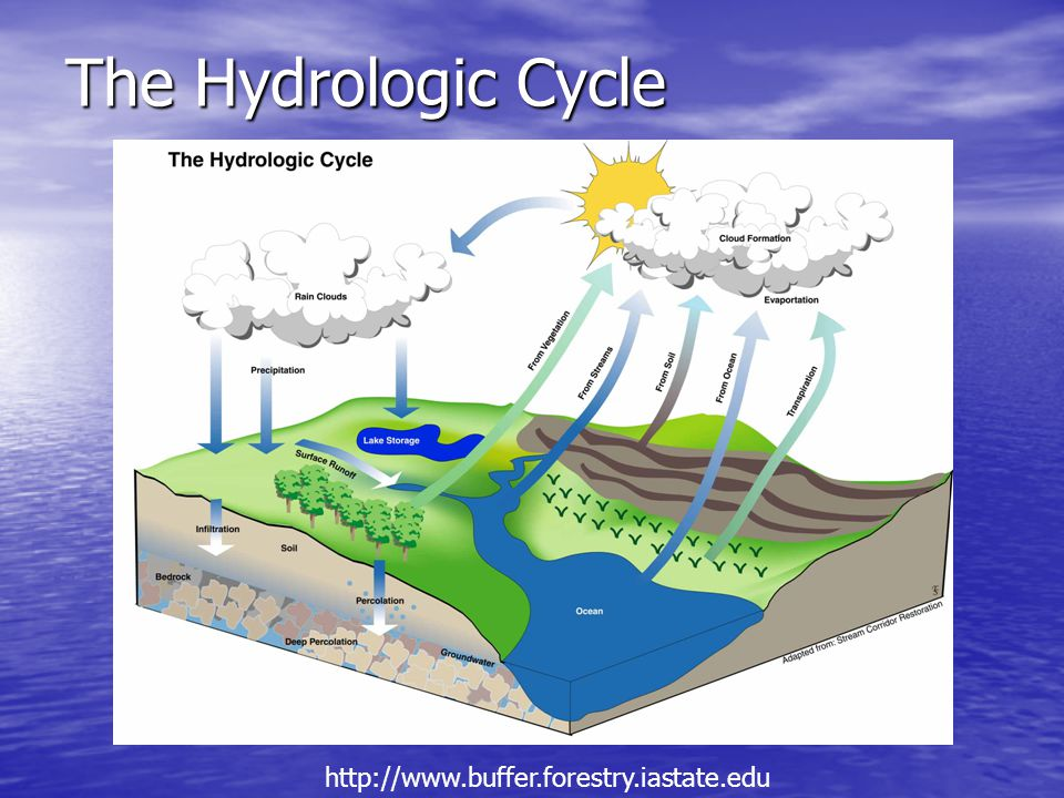 The Hydrologic Cycle http://www.buffer.forestry.iastate.edu