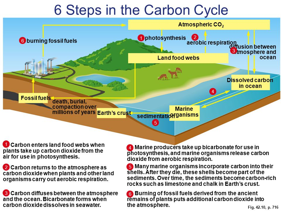 6 Steps in the Carbon Cycle