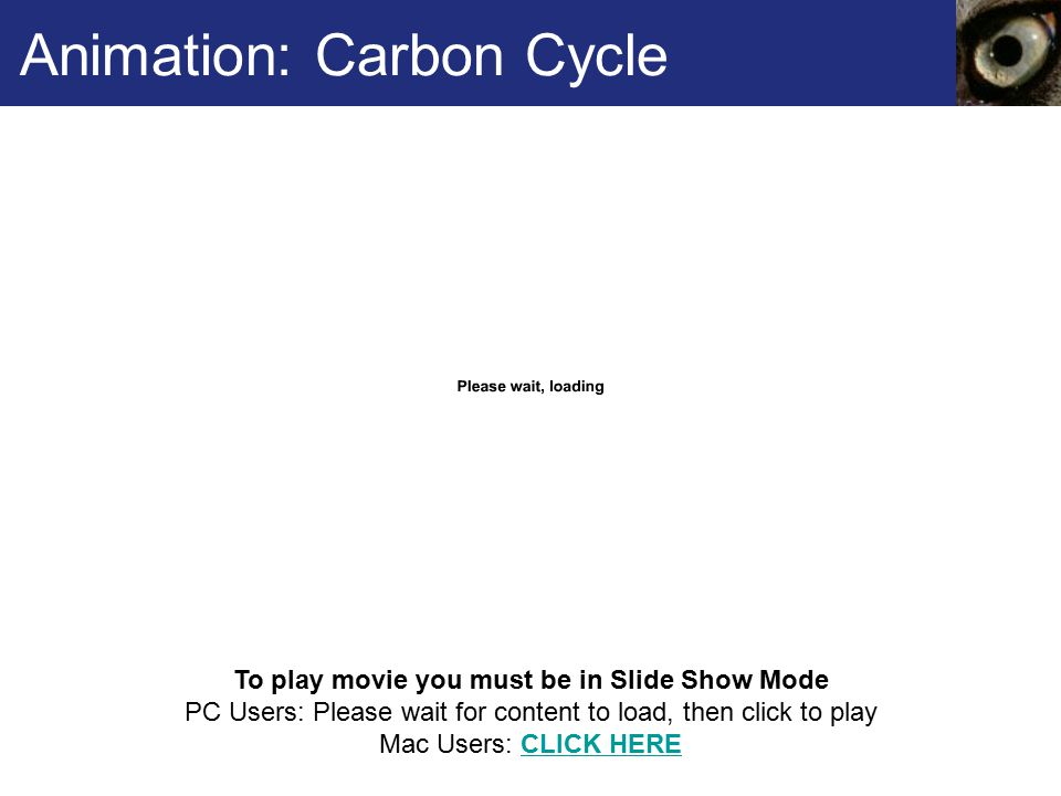 Animation: Carbon Cycle