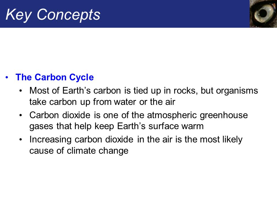 Key Concepts The Carbon Cycle