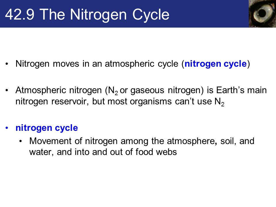 42.9 The Nitrogen Cycle Nitrogen moves in an atmospheric cycle (nitrogen cycle)