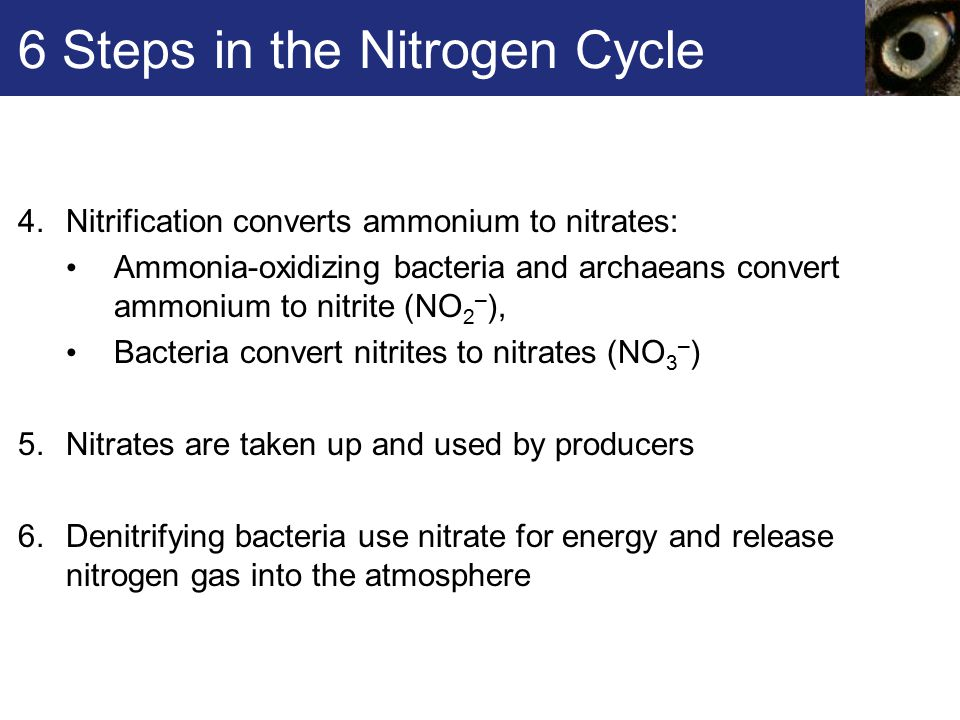 6 Steps in the Nitrogen Cycle