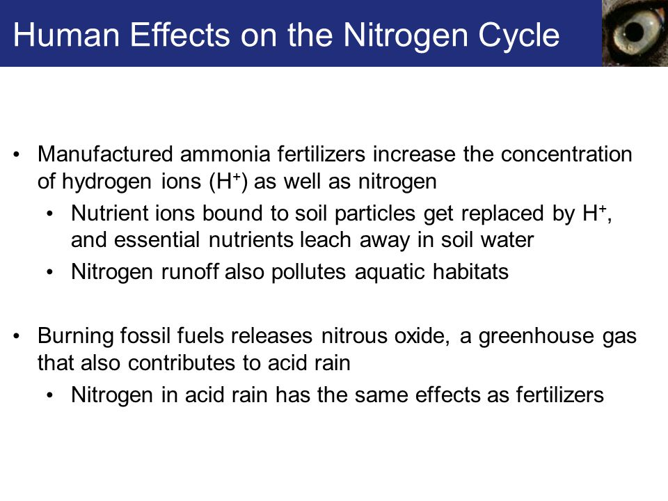 Human Effects on the Nitrogen Cycle