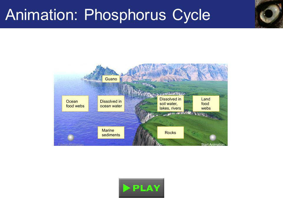 Animation: Phosphorus Cycle