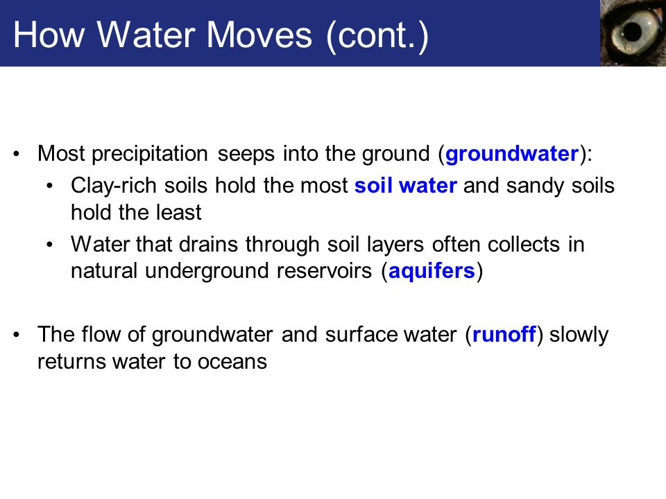 How Water Moves (cont.) Most precipitation seeps into the ground (groundwater):