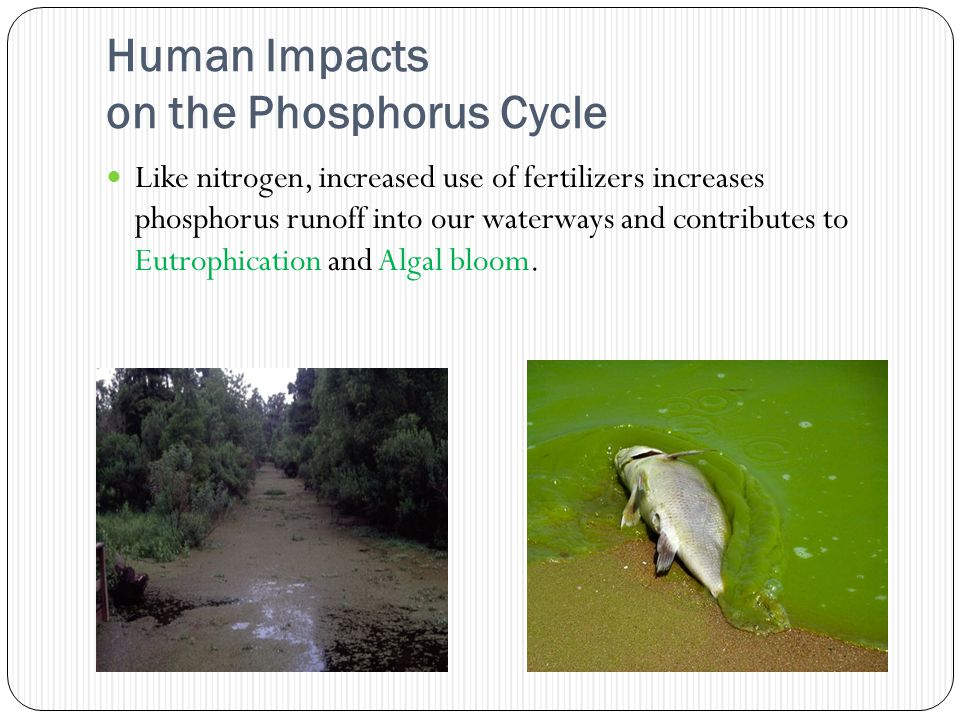 Human Impacts on the Phosphorus Cycle