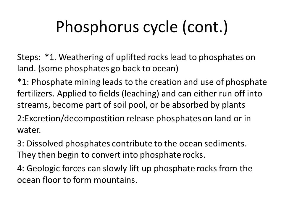 Phosphorus cycle (cont.)