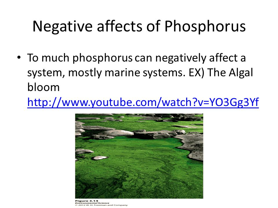 Negative affects of Phosphorus
