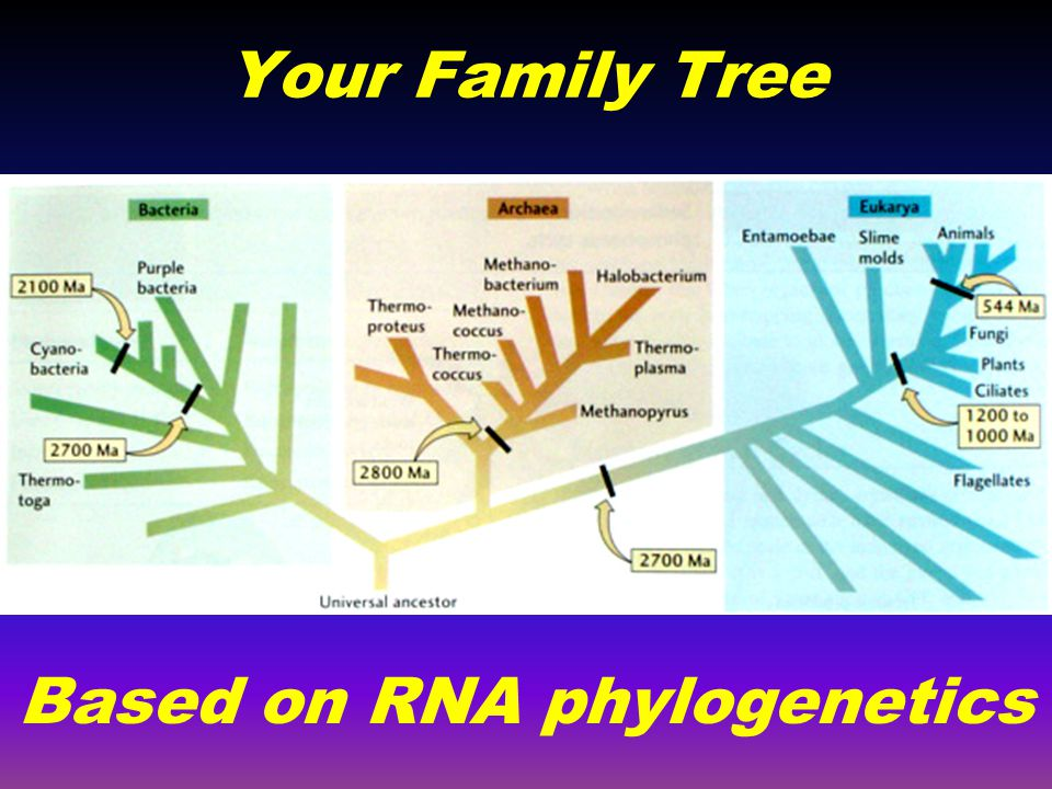 Based on RNA phylogenetics