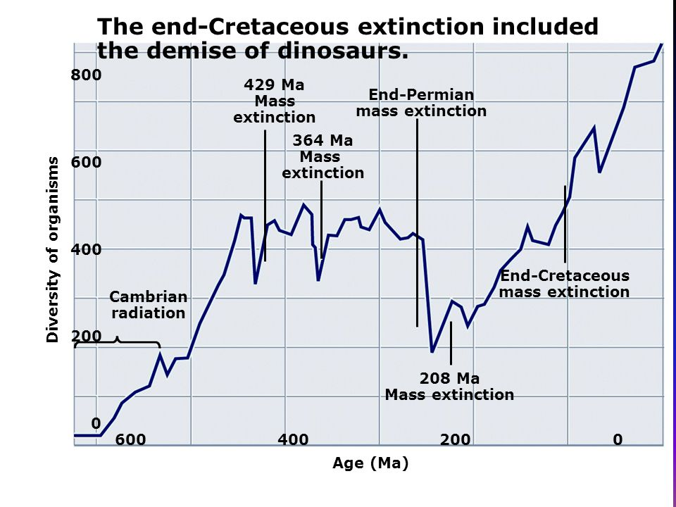 The end-Cretaceous extinction included the demise of dinosaurs.