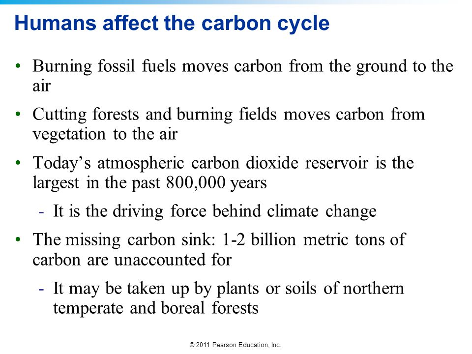 Humans affect the carbon cycle