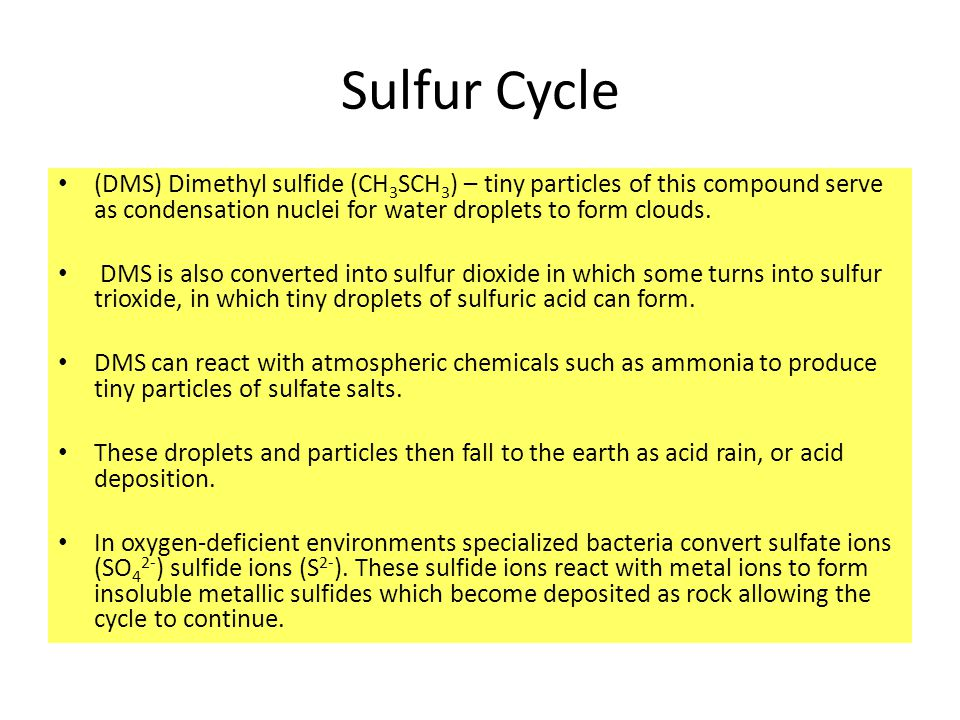 Sulfur Cycle (DMS) Dimethyl sulfide (CH3SCH3) – tiny particles of this compound serve as condensation nuclei for water droplets to form clouds.