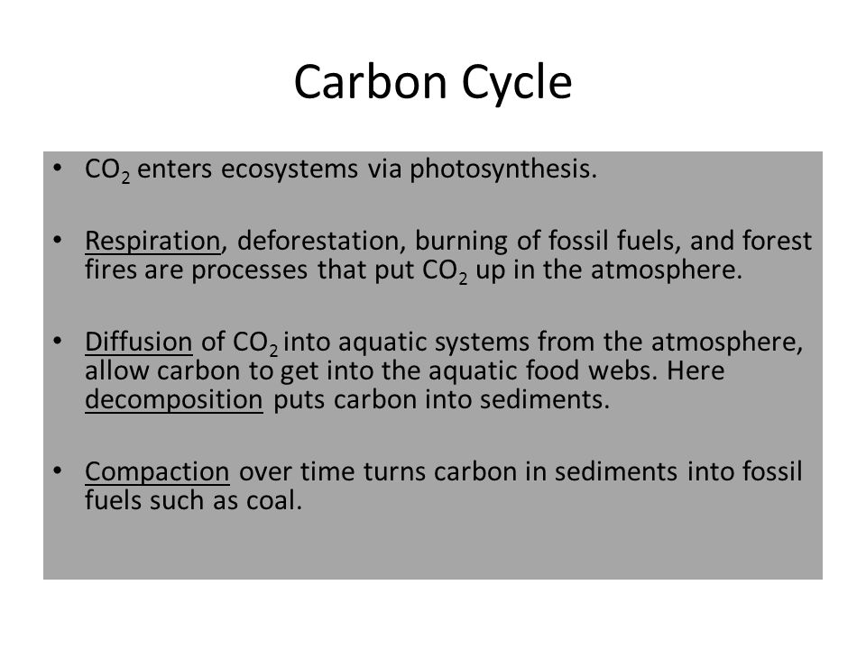 Carbon Cycle CO2 enters ecosystems via photosynthesis.