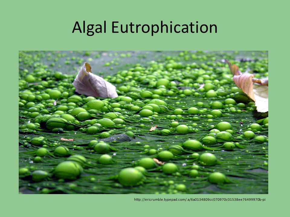 Algal Eutrophication