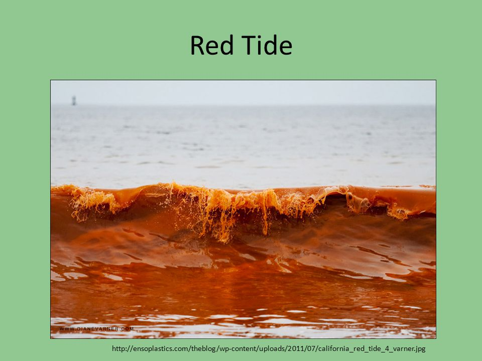 Red Tide http://ensoplastics.com/theblog/wp-content/uploads/2011/07/california_red_tide_4_varner.jpg.