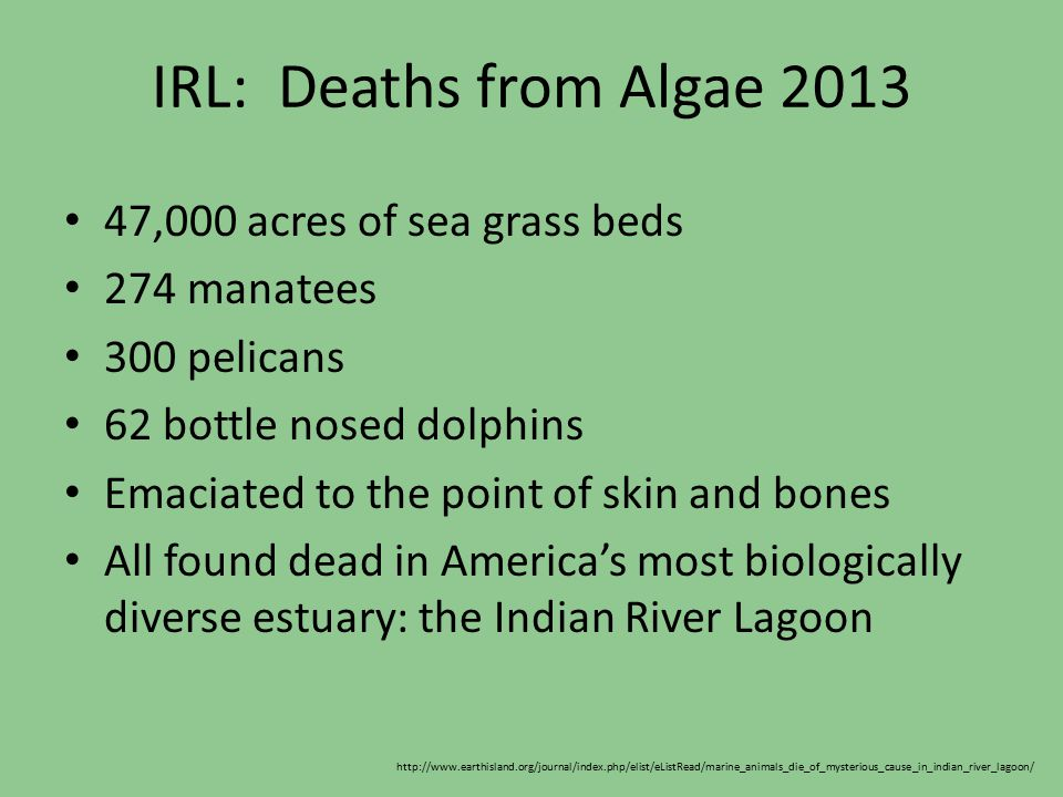 IRL: Deaths from Algae 2013 47,000 acres of sea grass beds