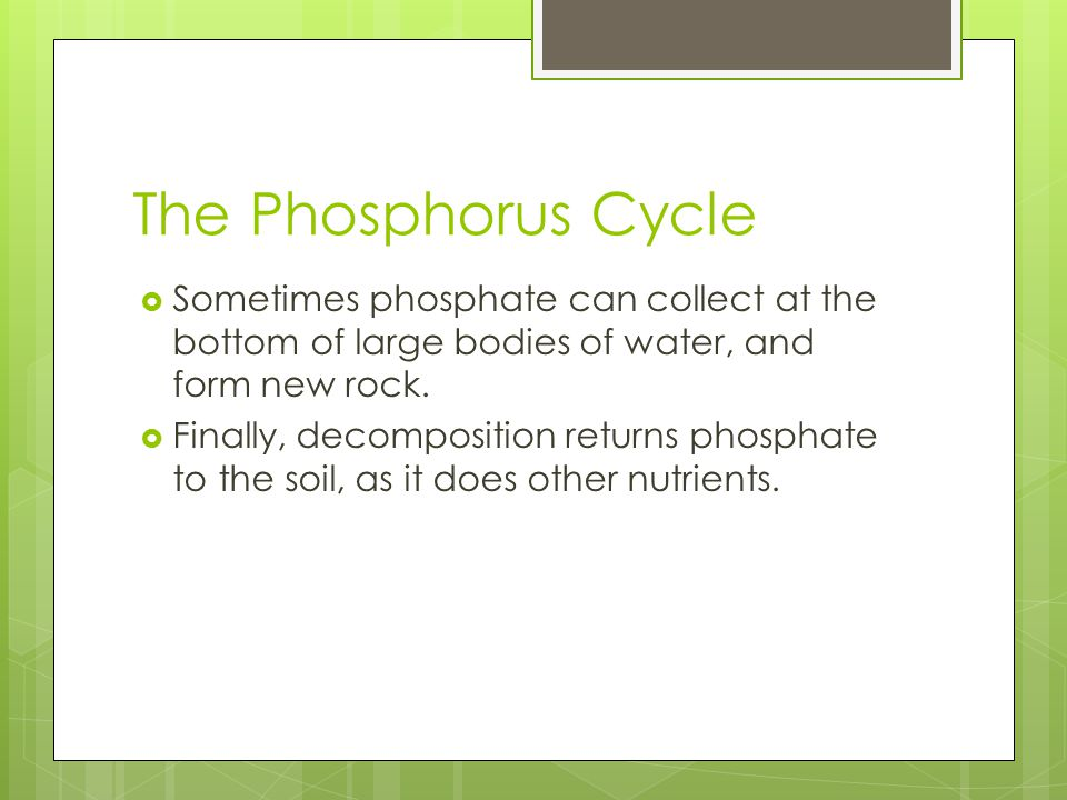 The Phosphorus Cycle Sometimes phosphate can collect at the bottom of large bodies of water, and form new rock.