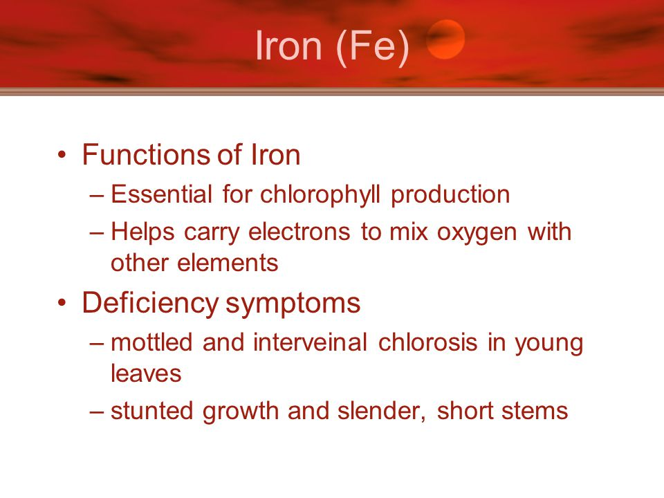 Iron (Fe) Functions of Iron Deficiency symptoms