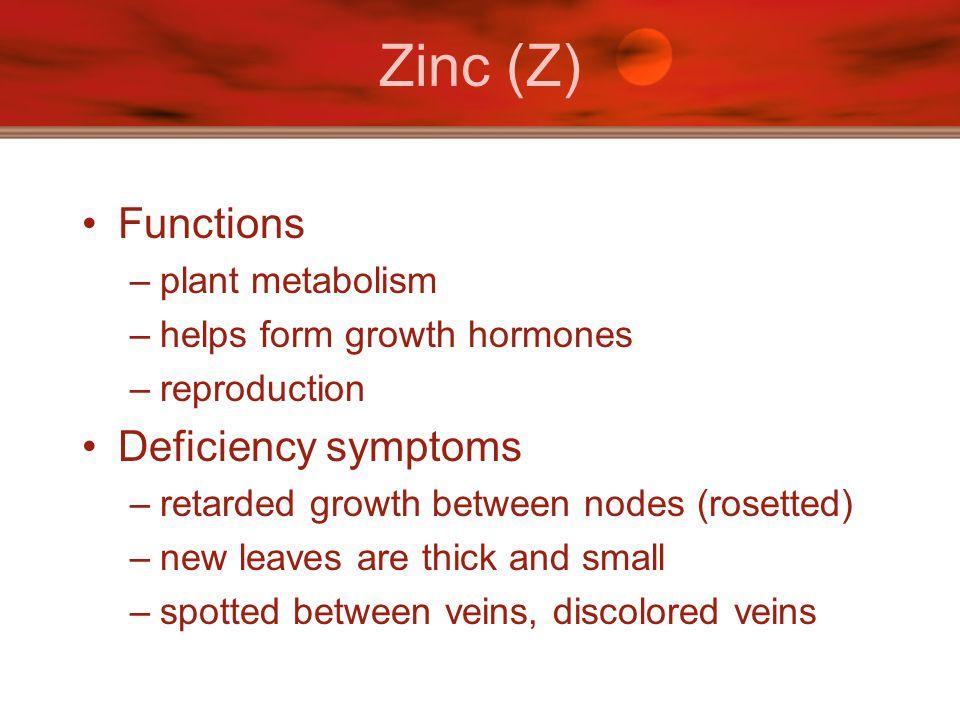 Zinc (Z) Functions Deficiency symptoms plant metabolism