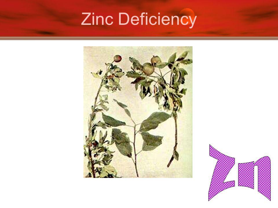 Zinc Deficiency Zn
